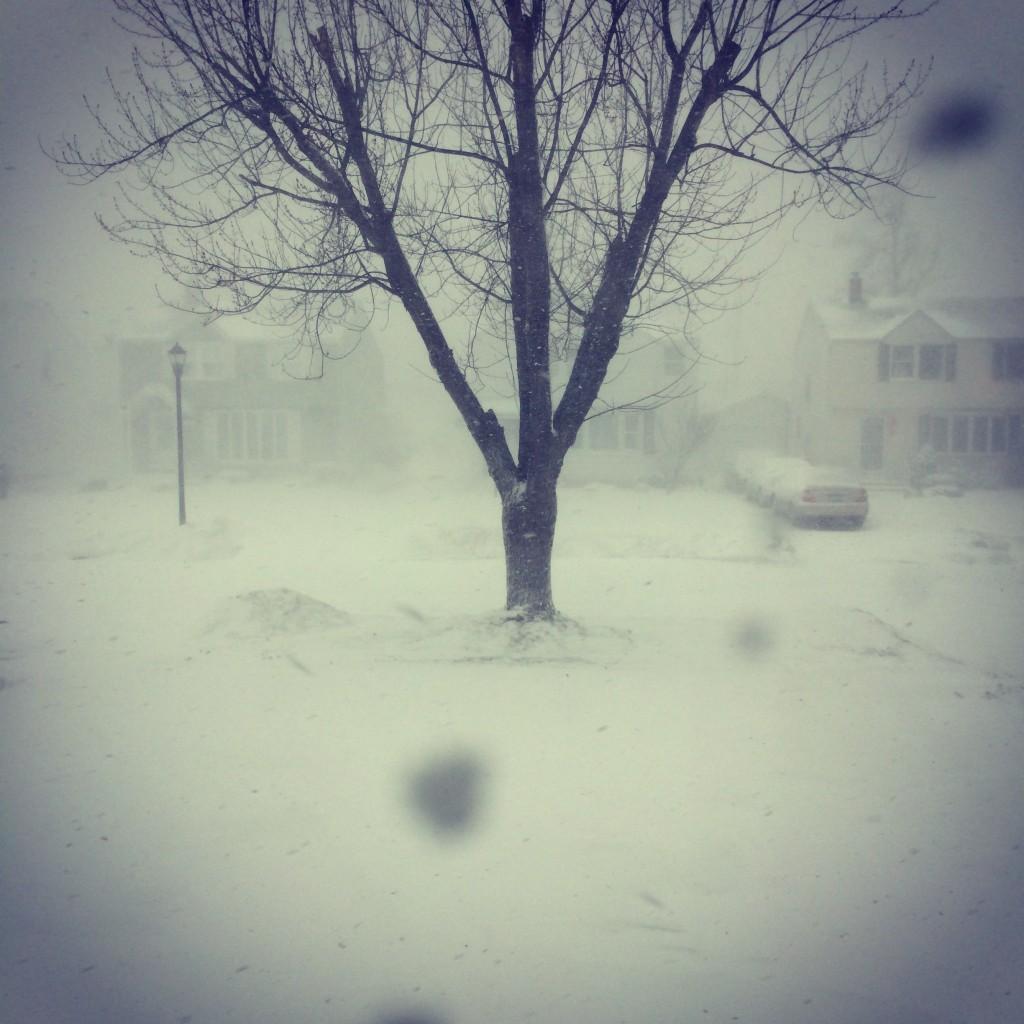 Buffalo Blizzard 2014